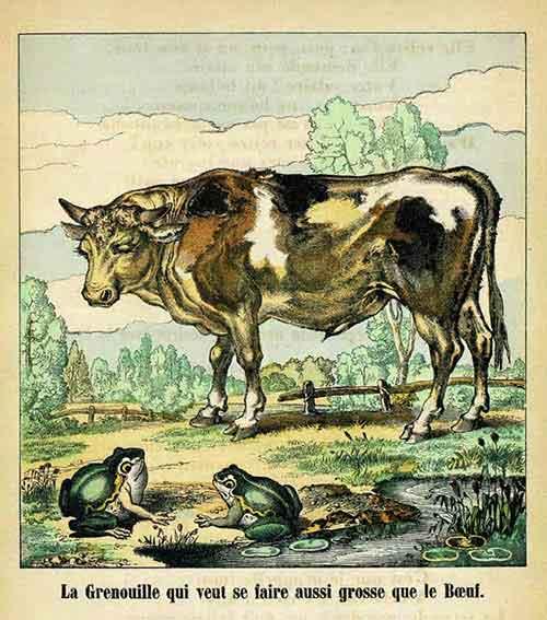 Illustration « La Grenouille qui veut se faire plus grosse que le Bœuf, Charles Pinot