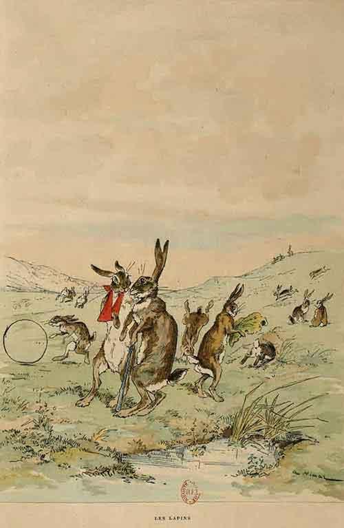 Illustration Les lapins, Auguste Vimar